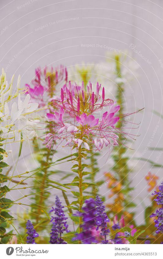 bunte Blumen floral Flora Pflanze Natur Blüte natur natürlich schön Garten blume Sommer Nahaufnahme pink lila Blüten Blühend garten violett Blumenstrauß