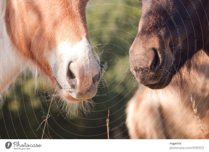 Nüsternflüstern Natur Pflanze Sommer Tier Wiese Tierjunges Gras klein natürlich niedlich beobachten Freundlichkeit Pferd Neugier Fell Weide