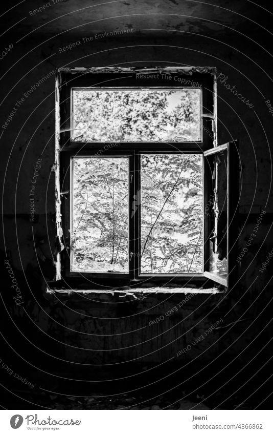 Lost Land Love | Innen dunkel und außen hell Kontrast Kontrastreich Kontraststark schwarz weiß Schwarzweißfoto schwarzweiß Fenster offen geöffnet ausblick