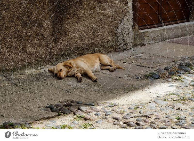 Tier / Sardische Siesta Hund Stadt Erholung ruhig Tier Haus Wand Straße Mauer Glück grau braun liegen Zufriedenheit Tür genießen