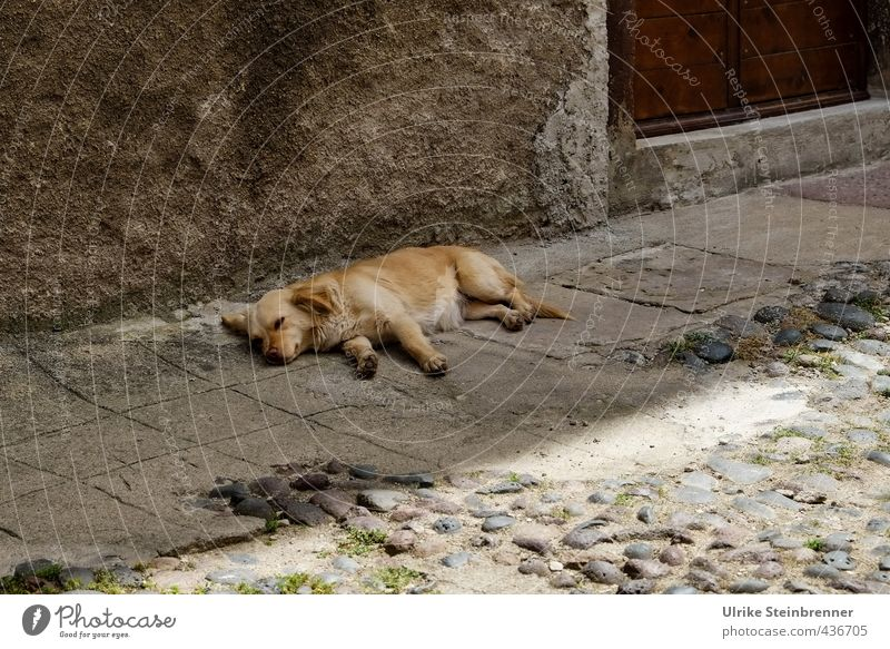 Tier / Sardische Siesta Hund Stadt Erholung ruhig Haus Wand Straße Mauer Glück grau braun liegen Zufriedenheit Tür genießen