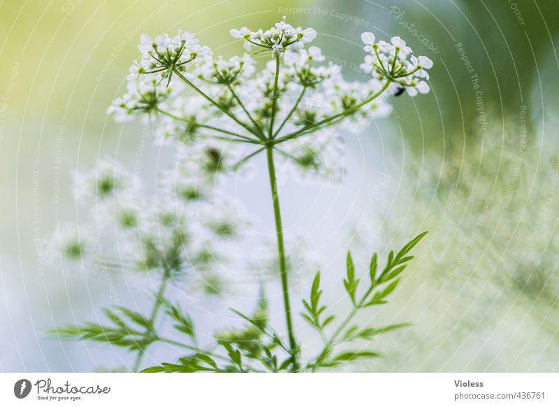 ...another world Natur grün Pflanze Umwelt Wiese Blüte Blühend Wildpflanze