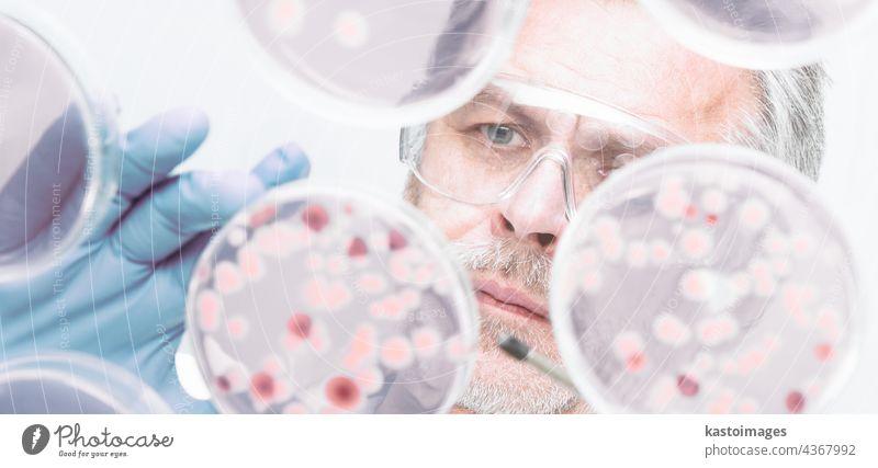 Senior-Lebenswissenschaftlerin, die Bakterien veredelt. Ebola Zika analysieren Biografie biologisch Biologie blau Zelle klinisch Nahaufnahme Kolonie Kultur