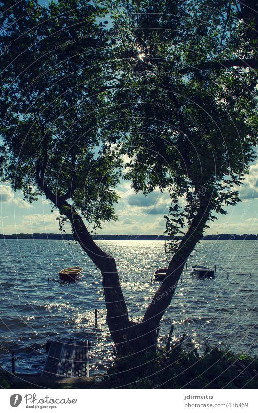 V Ausflug Sommer See Natur Landschaft Pflanze Wasser Himmel Wolken Baum Seeufer Ruderboot Erholung Farbfoto Außenaufnahme Tag Sonnenlicht Gegenlicht