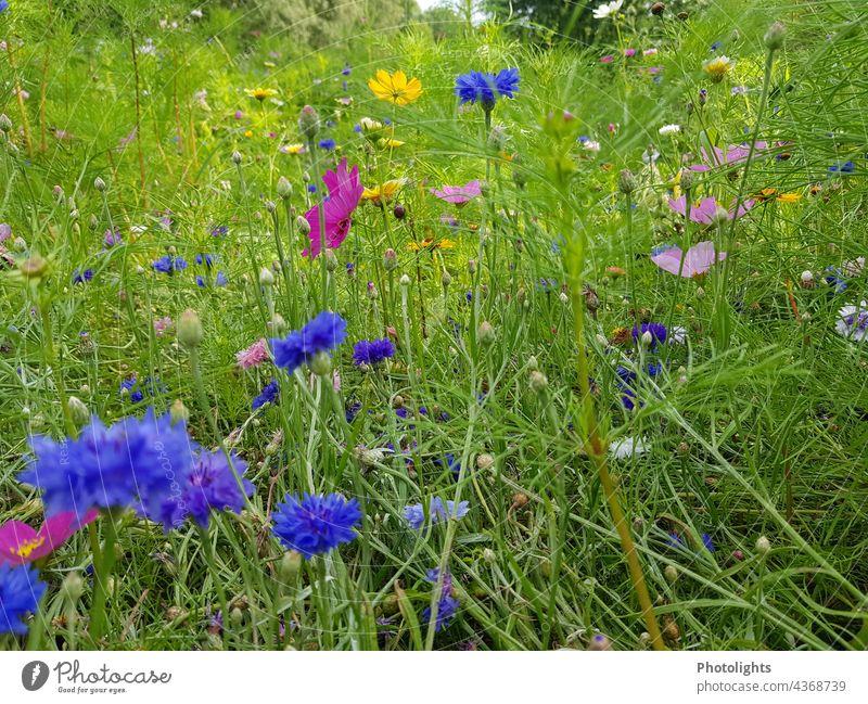 Bunte Bienenwiese Natur Blumen Wiese Pflanzen Blühend Außenaufnahme Blüte Garten Sommer Farbfoto Frühling grün natürlich Blumenwiese Menschenleer Nahaufnahme