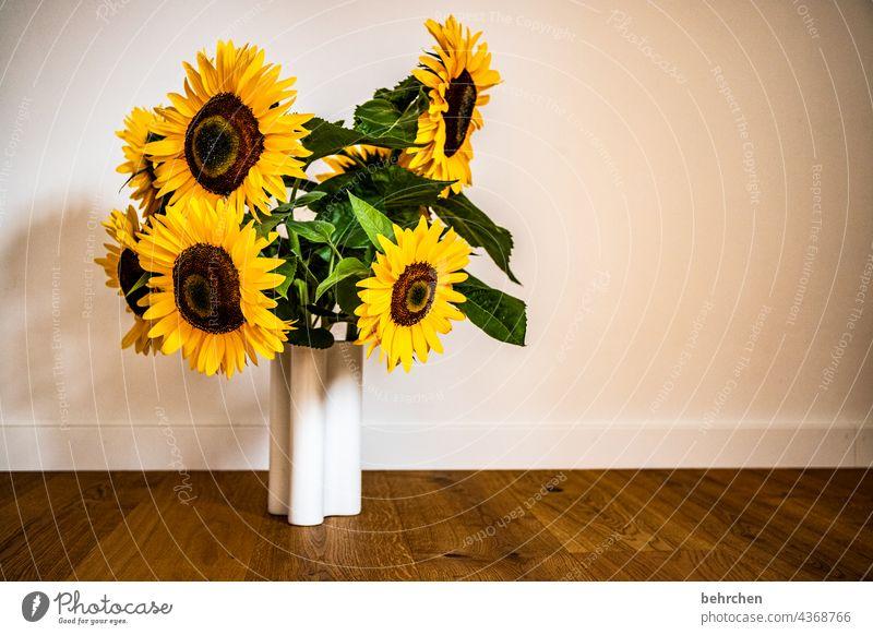 blumiger sonntag Pflanzen Wohnzimmer Parkett Vase Sonnenblume prächtig Sonnenlicht Blütenstaub Wärme Umwelt Blütenblatt leuchtend Blume blühen wunderschön
