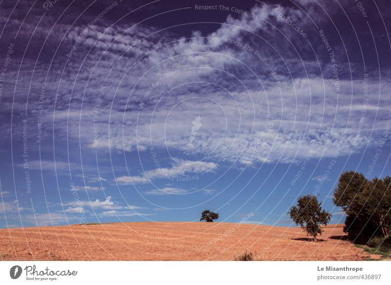 Irgendwo im Taunus I Umwelt Landschaft Luft Himmel Wolken Sommer Schönes Wetter Wärme Dürre Baum Feld Idstein Unendlichkeit blau orange weiß Zufriedenheit