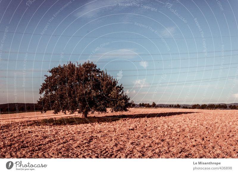 Irgendwo im Taunus II Umwelt Natur Landschaft Erde Sand Luft Himmel Wolken Sommer Schönes Wetter Wärme Dürre Baum Wallrabenstein ästhetisch blau braun gelb gold