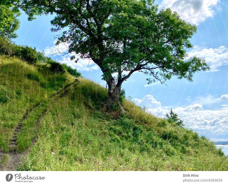Wanderpfad am kleinen Belt in Dänemark Baum Pfad Natur wandern Landschaft Wege & Pfade Spaziergang Außenaufnahme Erholung Fußweg Menschenleer Umwelt Farbfoto