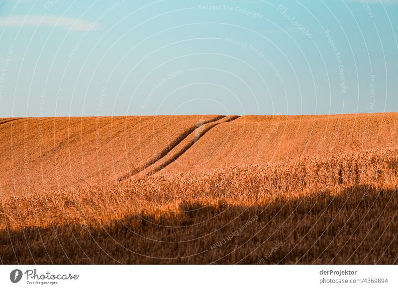 Feld auf einer Halbinsel in Dänemark Naturerlebnis Lebensfreude Gedeckte Farben abstrakt Muster Strukturen & Formen Textfreiraum links Textfreiraum unten
