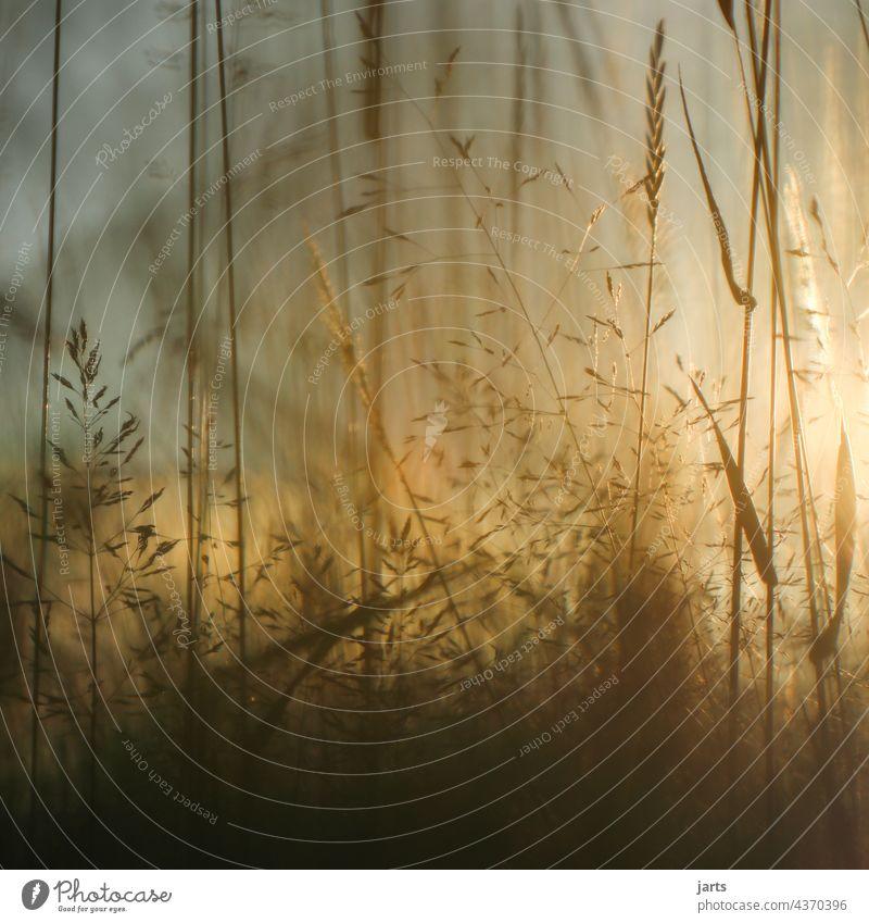 Sommerabend in einer Wiese mit Blumen und Gras Sonnenuntergang Licht Schatten Natur Außenaufnahme Farbfoto Pflanze Menschenleer Abend Sonnenlicht Schönes Wetter