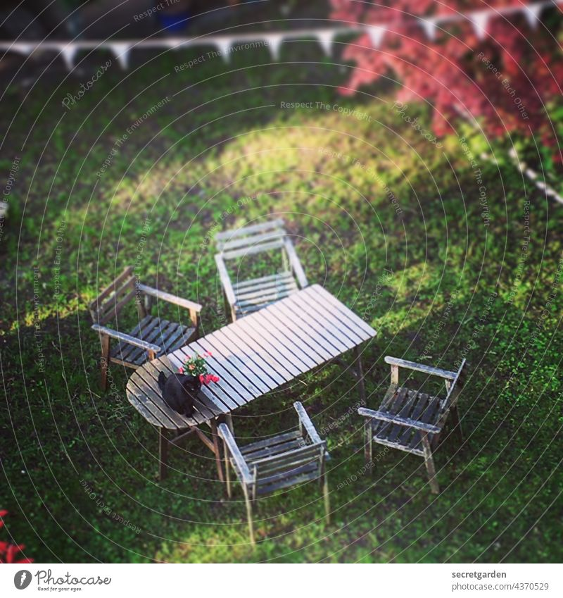 Sitzgelegenheit im Abendlicht Katze Garten Gartenmöbel Rasen Gras Holz Herbst Tisch Stühle Vogelperspektive oben unten Gartenidylle Katzenfreund ungehorsam