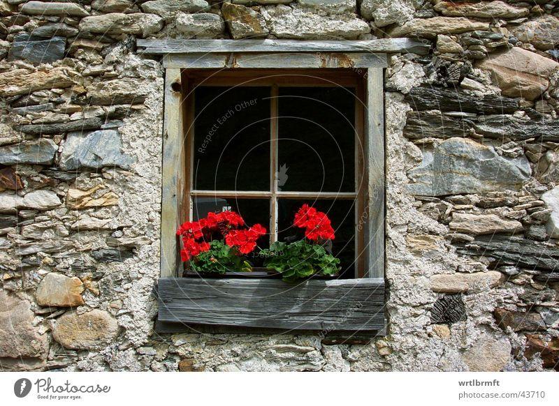 Das Fenster Blume Hütte Mauer Wand Stein Holz alt rot Fensterkreuz Hüttenferien Farbfoto Außenaufnahme Detailaufnahme Tag Kontrast Fensterrahmen Fensterbrett
