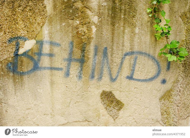 BEHIND !  steht in blauen großen Buchstaben an der mit Efeu bewachsenen Mauer behind Präposition hinter englisch zurück dahinten Hintern Popo Kehrseite