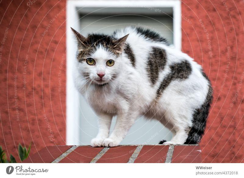 Eine kleine Katze mit starken Gefühlen - Neugier, Angst und Angriffslust zugleich Kater Tier Haustier Abwehr Fell Haare Rücken Buckel Katzenbuckel sträuben