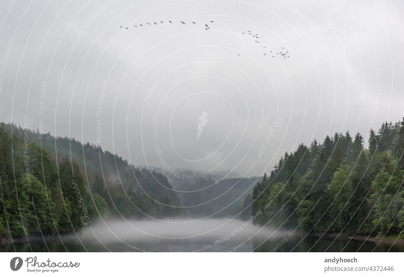 Die Saale an einem regnerischen Tag mit Zugvögeln im Sommer Hintergrund schön Schönheit Vögel Klima wolkig Land Landschaft Ökologie Umwelt Phantasie Flug