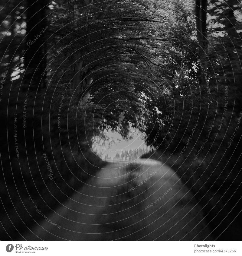Weg aus dem Wald. Bild in schwarzweiß Straße Bäume Landschaft Natur Laubbaum Laubbäume Blätter Schotter Schotterstraße Umwelt düster unheimlich beängstigend