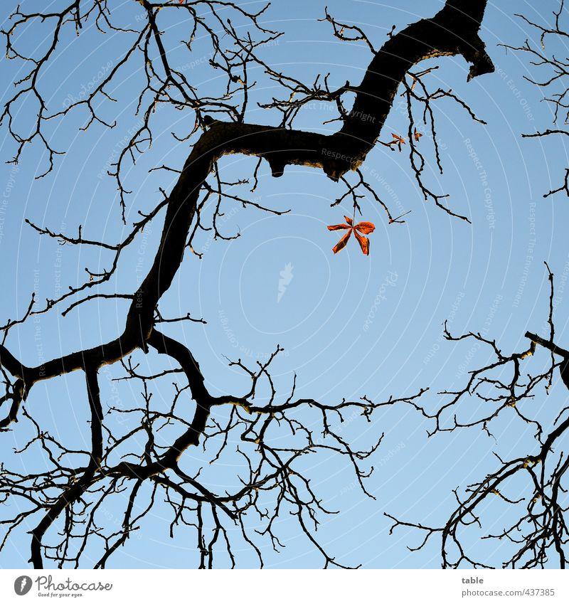 Widerstandshaltung Himmel Natur blau Pflanze Baum Einsamkeit ruhig Blatt Umwelt Herbst Holz Wetter orange Schönes Wetter einzeln
