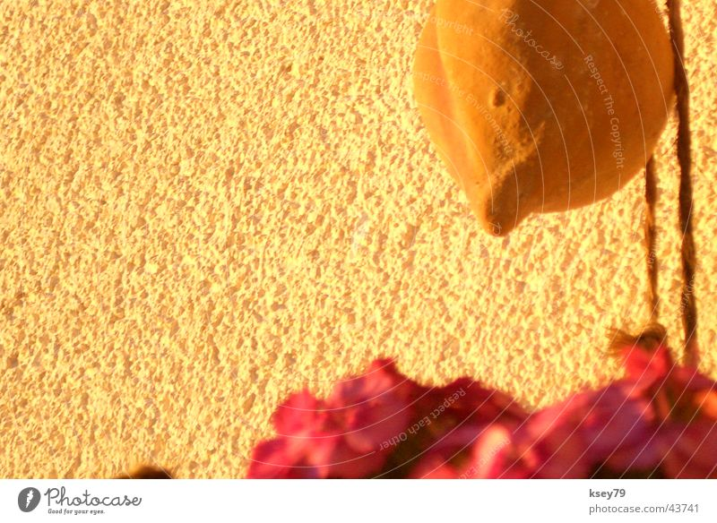 Ohne Titel Blume Wand Wärme Physik Warmes Licht
