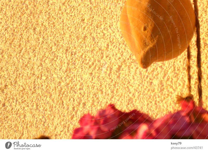 Ohne Titel Physik Warmes Licht Unschärfe Blume Wand Makroaufnahme Nahaufnahme Wärme