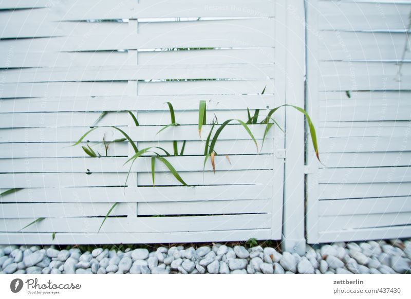 Kissenverzeichnung, partiell unscharf Freude Erholung Freizeit & Hobby Sommer Häusliches Leben Wohnung Haus Garten Natur Blume Blatt Grünpflanze Park Wachstum
