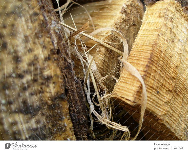 gutholz Holz Birke Brennholz Makroaufnahme gut Holz