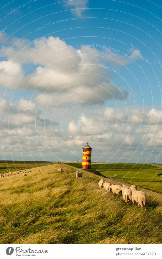 Schafe am Pilsumer Leuchtturm Umwelt Natur Landschaft Wasser Himmel Sommer Herbst Küste Sehenswürdigkeit Nutztier Herde Schafherde Ostfriesland Krummhörn