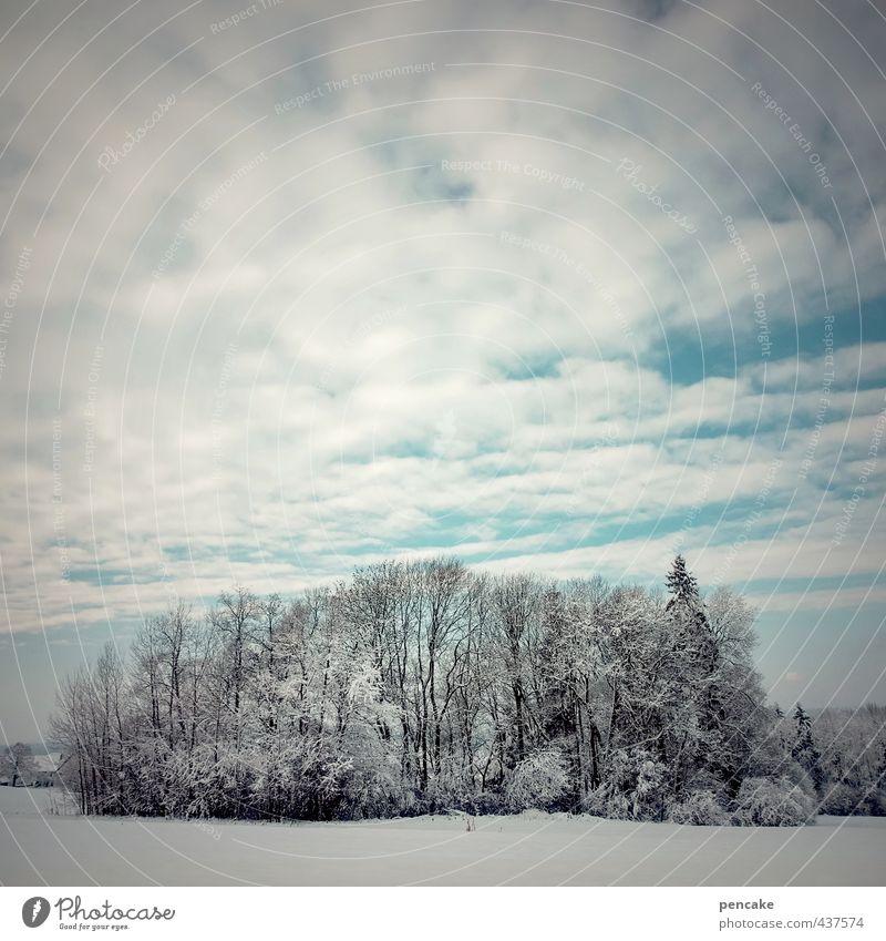 ruhezeit Natur Landschaft Himmel Wolken Winter Schnee Baum Feld Wald Zeichen ästhetisch kalt Auwald Allgäu Oberschwaben ruhen Ruhetag 7 Schneelandschaft