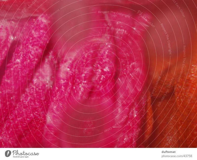 Pansen Wasser rosa Ordnungsliebe Reinlichkeit Sauberkeit anstrengen Wäsche Handtuch Falte nass Wäsche waschen Tropfen pink verzerrt abtrocknen geknautscht