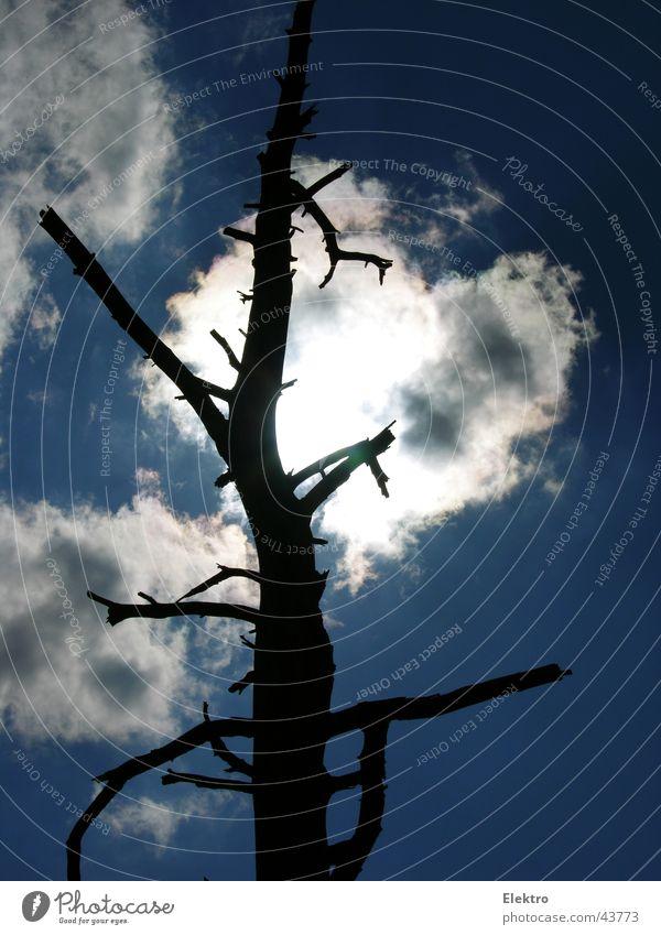 Weltsterben Tod Holz Vergänglichkeit Trauer Ast Ende Zweig Verzweiflung Sorge kahl untergehen Geäst Ödland Zweige u. Äste matt Apokalypse