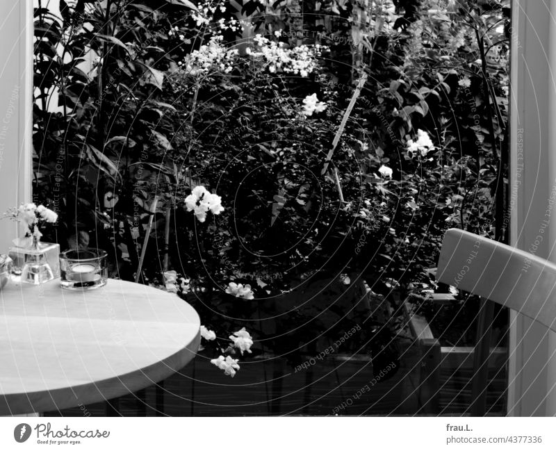 Am Küchenfenster Pflanze Außenaufnahme Fenster Balkon Terrasse Blume Sommer Topfpflanze Löwenmäulchen Wiesenraute Tisch Stuhl Stuhllehne Blüte Vicke Fingerhut