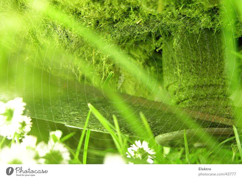 . cut Blume Wiese Gras Garten Park Rasen Sportrasen Handwerk Gänseblümchen Messer geschnitten Haarschnitt Gartenbau Rasenmäher Gartengeräte mähen