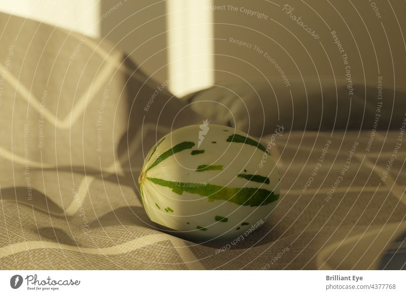 liegende Snowball Melone auf einer Decke im morgendlichen Sonnenlicht Gesunde Ernährung Ordnung Vegetarier Schneeballmelone niemand Bestandteil Frische