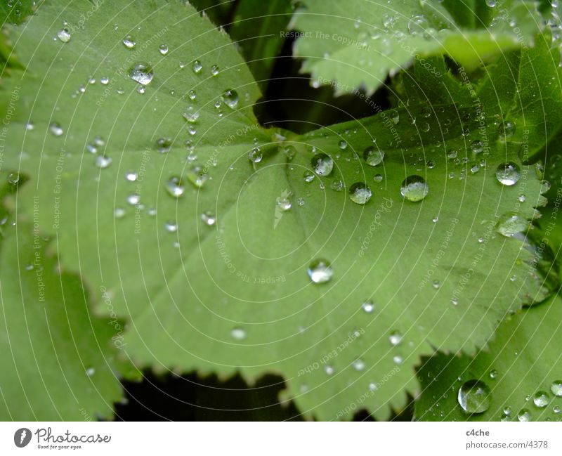 TropfenAufBlatt Wasser Haare & Frisuren Regen Wassertropfen