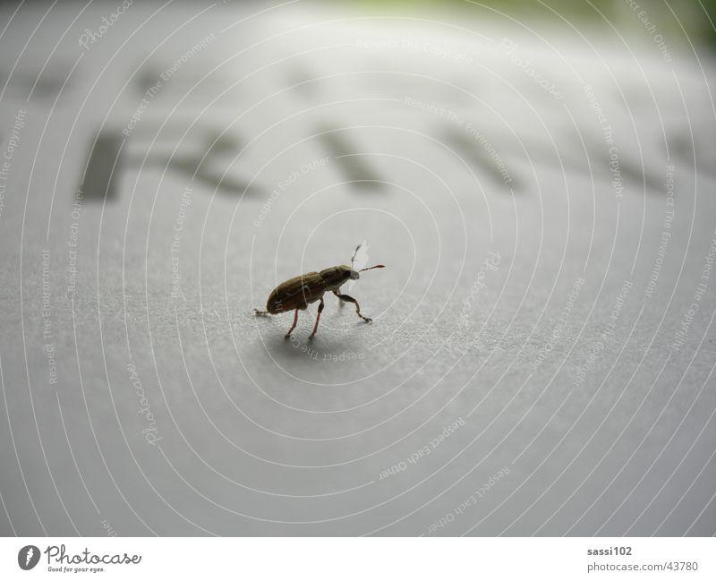 Das kleine Krabbeln Blatt Papier Schriftzeichen Insekt Wildtier Käfer krabbeln Schädlinge