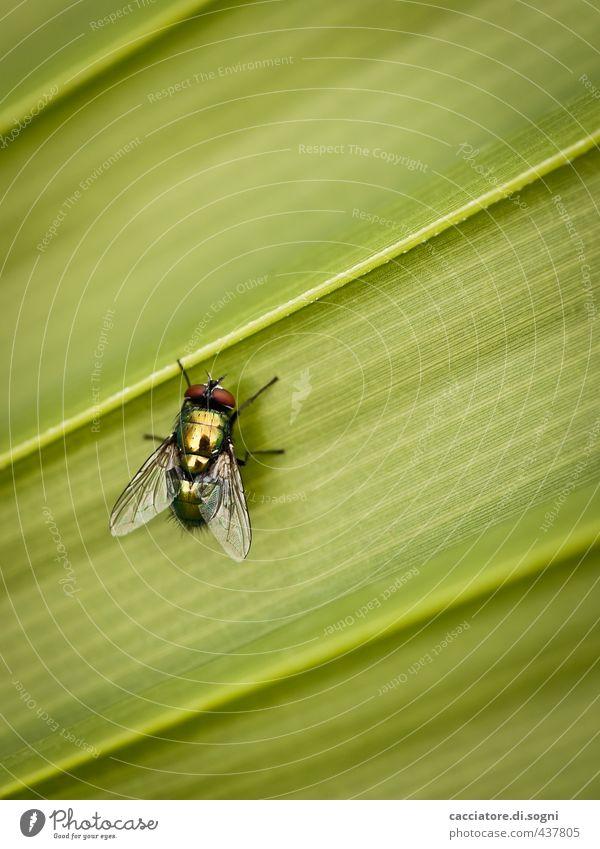 insect Natur grün Sommer Erholung ruhig Tier Blatt Erotik klein natürlich Linie sitzen Fliege authentisch frei Schönes Wetter