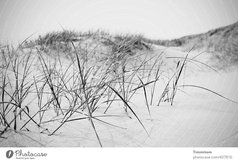 Sandgebirge. Natur Ferien & Urlaub & Reisen weiß ruhig schwarz Umwelt Gefühle grau Sand Wachstum ästhetisch Hügel Spuren Nordsee Düne Halm