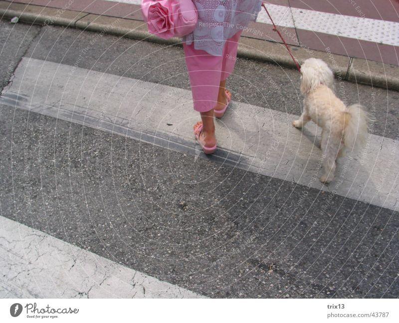 überquerung des zebrastreifens Frau Mensch weiß Tier feminin grau Hund Beine Schuhe 2 Zusammensein rosa Seil verrückt Europa Streifen