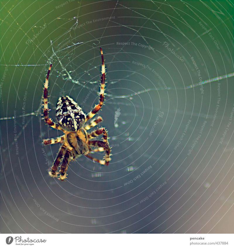 Ick gloob ick spinne | fallenstellerin Natur Sommer Tier Garten warten beobachten Zeichen fangen hängen Fressen Falle krabbeln Spinne Spinnennetz hocken schaukeln