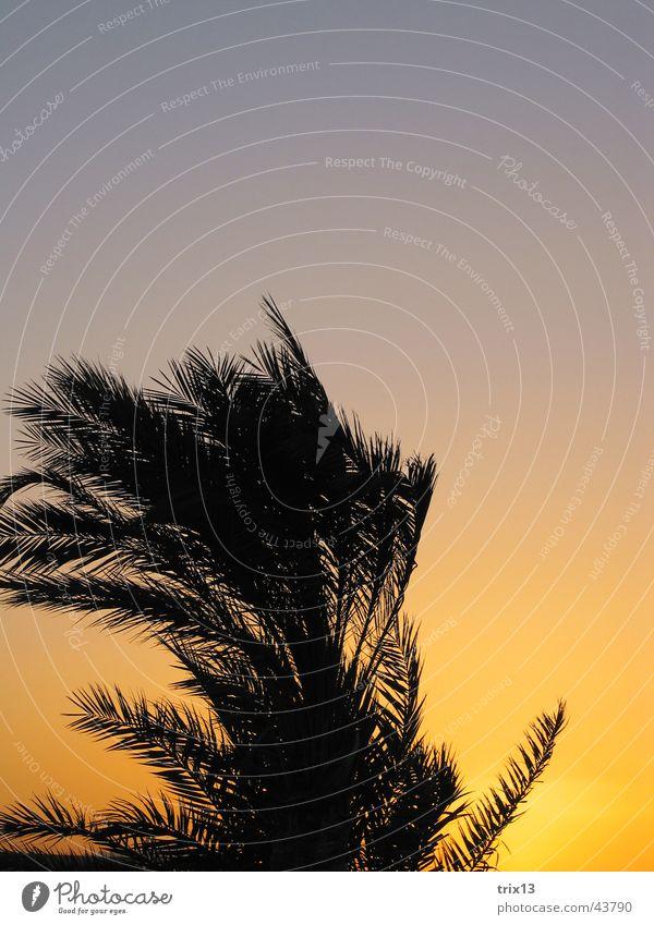 palme in der abendsonne Himmel Ferien & Urlaub & Reisen schwarz gelb orange Wind Palme Ägypten Hurghada Rotes Meer