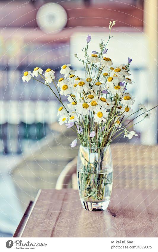 Blumenstrauß aus wilden Gänseblümchen (Bellis perennis) in einem Glas in einem Haus. im Innenbereich Ornament Lebensstile elegant bunt Hintergründe