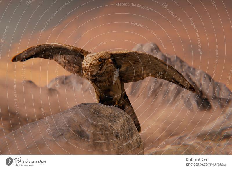 Turmfalke Weibchen auf Felsen sitzend und mit ausgebreiteten Flügeln Sitzen Porträt im Freien natürlich Flug Greifvogel Vorderseite schön Raptor Gipfel Bussard