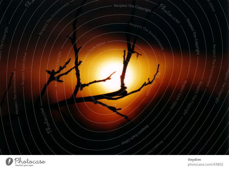 Sonnenuntergang Auge Stimmung orange Zweig
