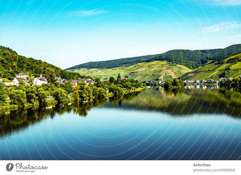 spiegelglatt Weinbau Weinberg Farbfoto Fluss Stadt Wald Natur Außenaufnahme Ferien & Urlaub & Reisen Umwelt Himmel Freiheit Ferne Ausflug Tourismus Moseltal