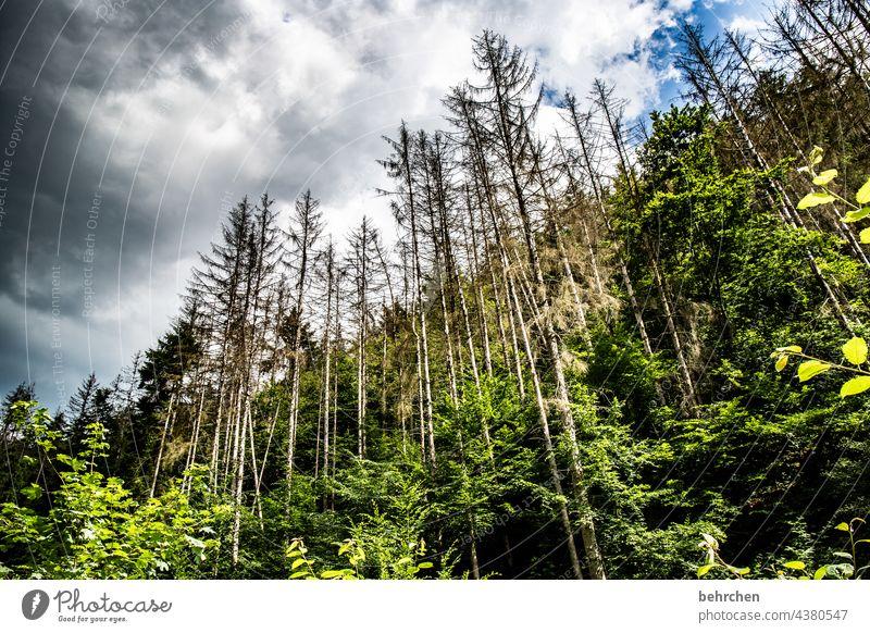 da ham wir den salat   waldsterben Klimawandel Abholzung Waldsterben Nadelbaum Umweltschutz Pflanze Holz Forstwirtschaft Hunsrück Nadelwald Bäume Baumstamm