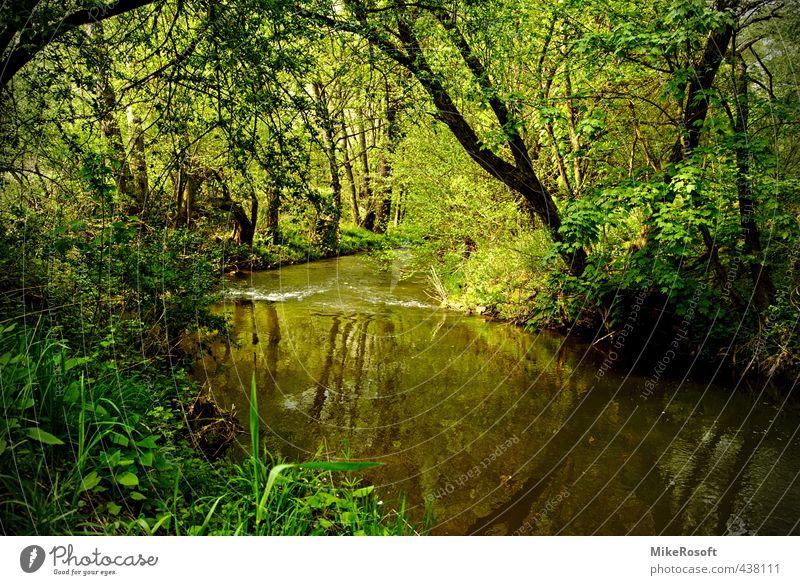 Am Fluss Natur grün Wasser Baum Frühling Flussufer Grünpflanze