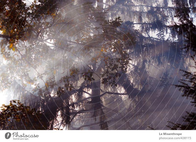 ... Die Wahrheit ist irgendwo da draußen. Natur Luft Sonnenlicht Herbst Baum Wald Heidelberg dunkel blau braun gold weiß Stimmung Warmherzigkeit Sehnsucht Angst