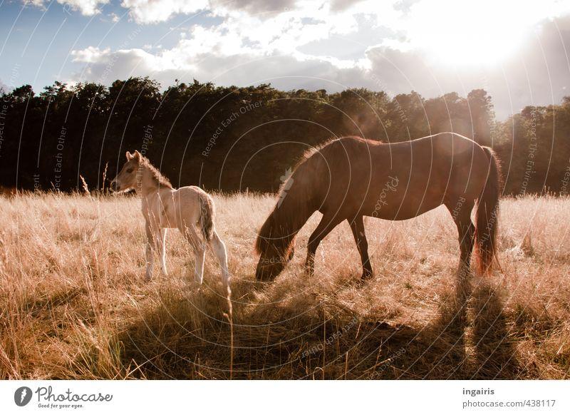 Tierkind Himmel Natur blau grün Pflanze Sommer Sonne Baum Landschaft Wolken gelb Tierjunges Gras grau klein