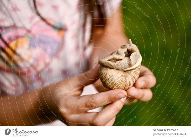 Kind hält Weinbergschnecke in den Händen Schnecke Schneckenhaus entdecken Kinderhand spielen erforschen Kindheit Familienleben beschützen zeigen Hand festhalten
