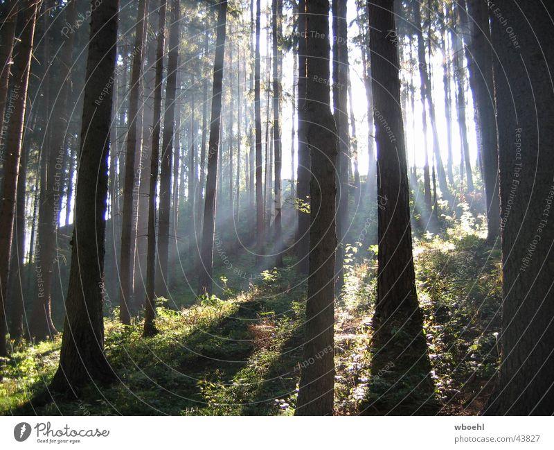 Ray of Light Sonne grün Sommer Wald Freundlichkeit